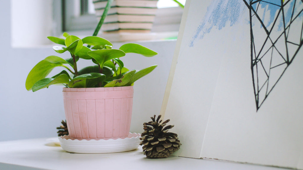 6 Easy Advises On How To Care For Your House Plants