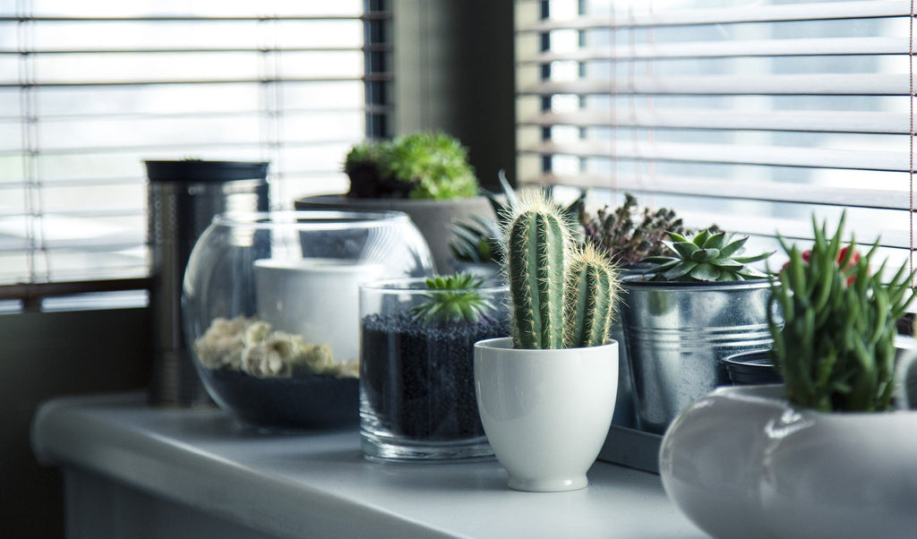 Indoor Plants: How They Help Us At Home And Work