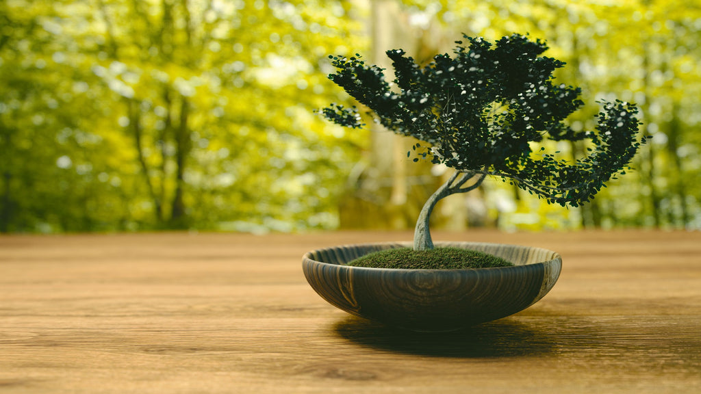 Bonsai Tree Care for Beginners: The Basics
