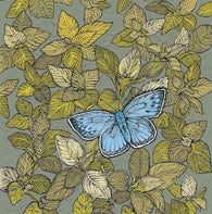 Blue Butterfly, In The Wild, TW113