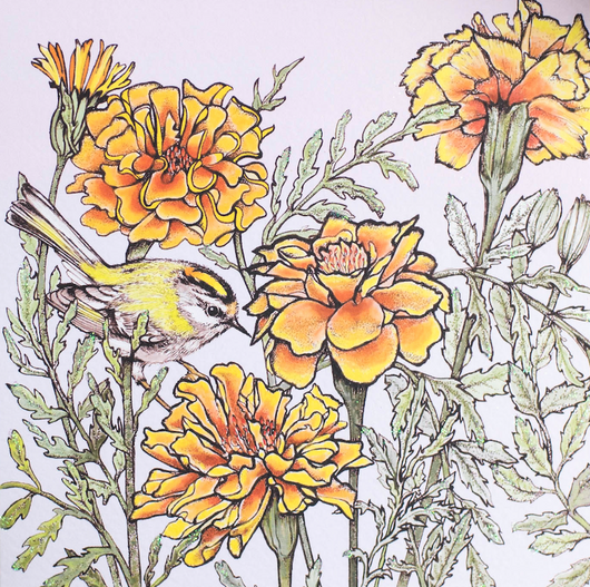 Firecrest  and Marigolds, In The Wild, TW58
