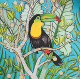 Toucan, In The Wild, TW49