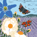 Meadow of Butterflies - Nature Trail, NT16A