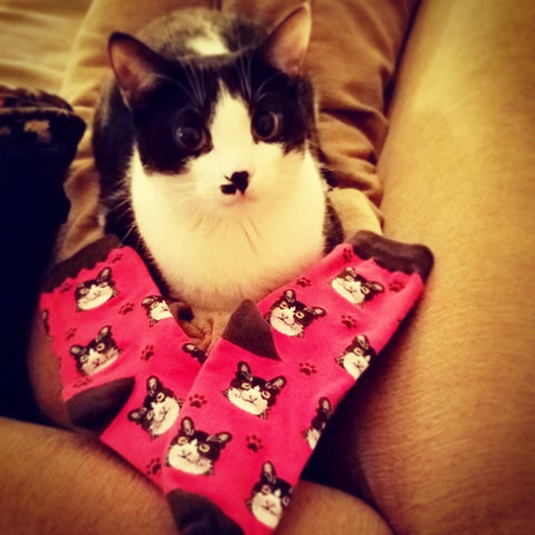 Pet Lovers Socks