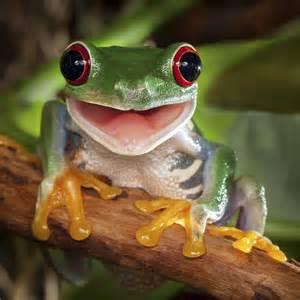 Happy Tree Frog Puzzle