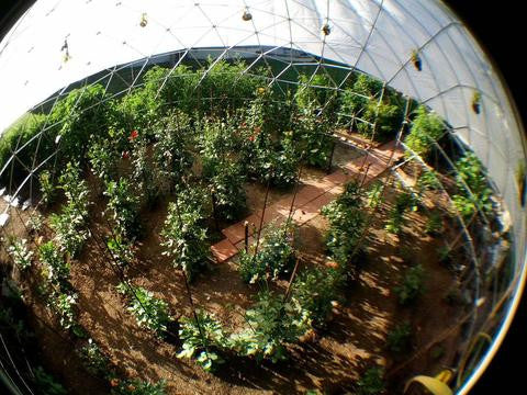 Geodesic Dome Greenhouse: Benefits of Growing Your Own Food