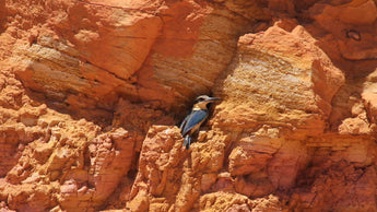 Kingfishers find opal - mining this spot ceases!