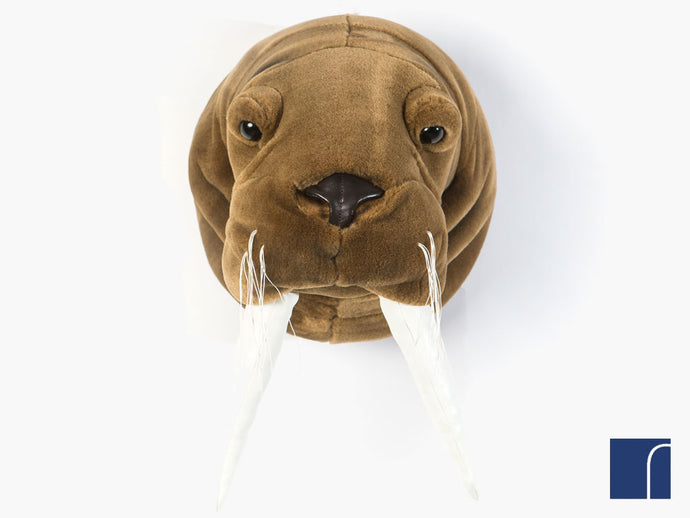 Jacob Walrus Head