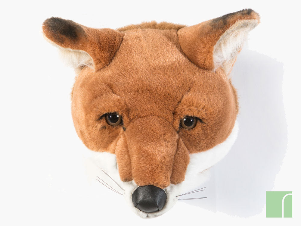 Louis-Fox-Head