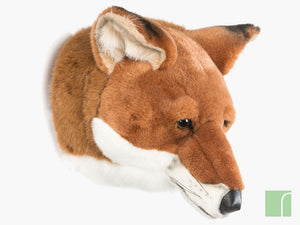 Louis-Fox-trophy-Head-wild-and-soft