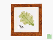 Oak Leaf Framed Picture