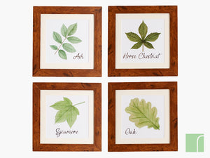 Set Of 4 Woodland Leaf Framed Prints