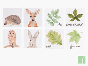 Set of 8 Woodland Prints