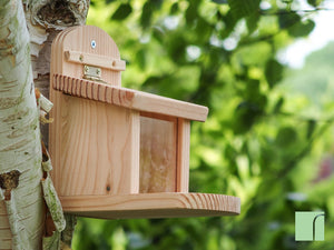 Squirrel Tree Feeder