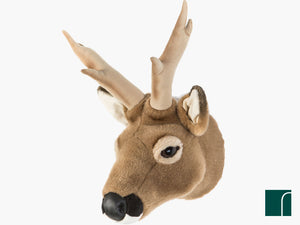 Toby-Roe-Deer-trophy-head