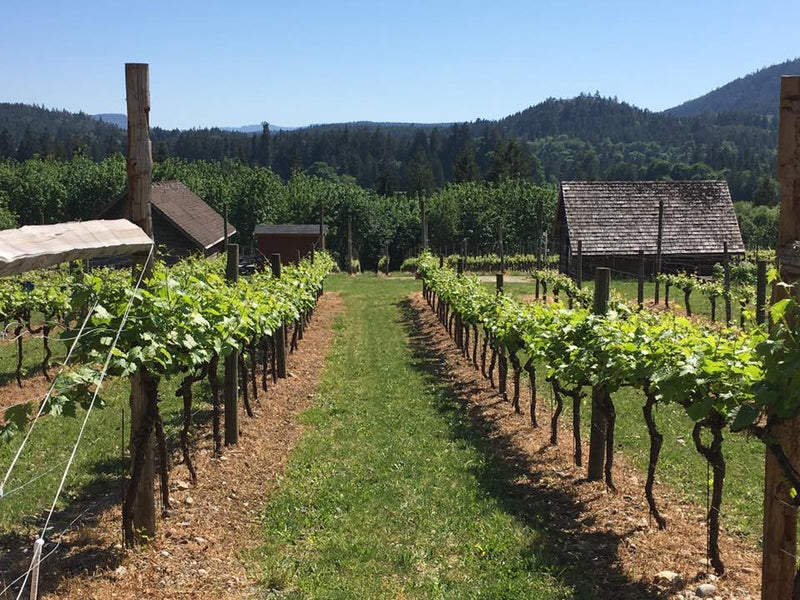 Fraser Valley Wine Tour | Chaberton, Township 7, Backyard