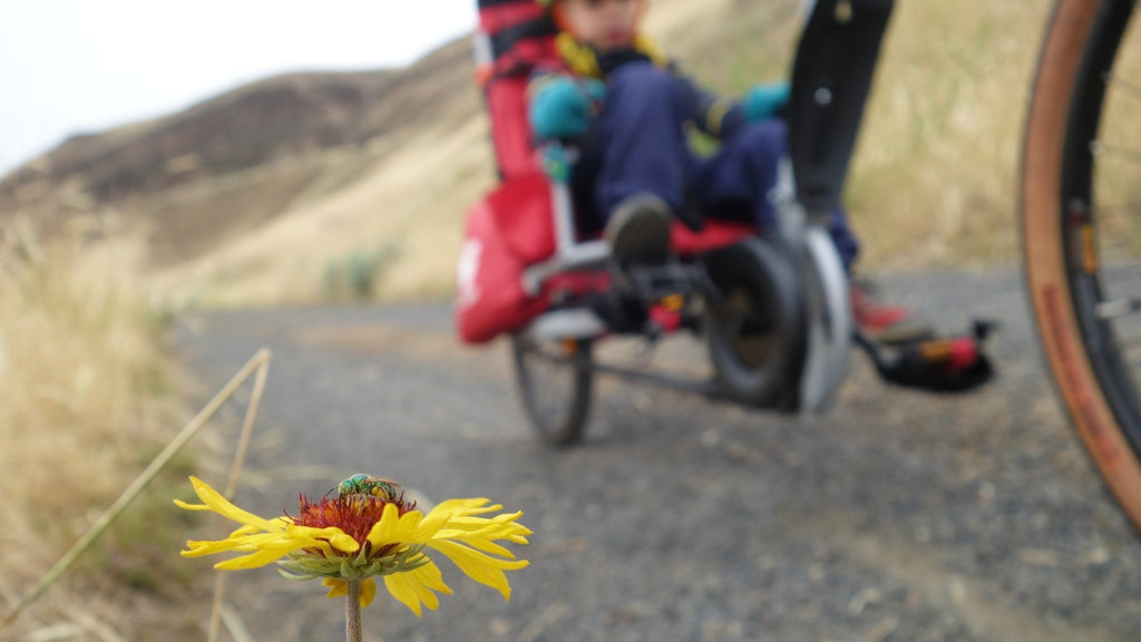 A yellow flower with a fly in the center, with a small child in a bike trailer in the background