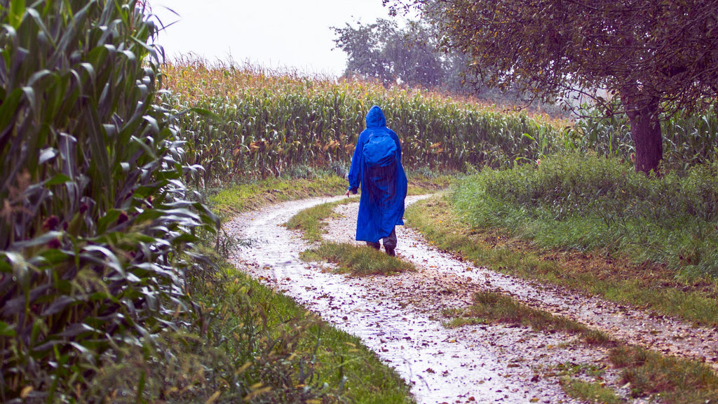 a person in a blue poncho walking on a dirt road by a corn field