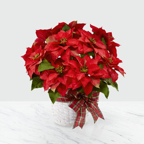 The Happiest Holidays Poinsettia