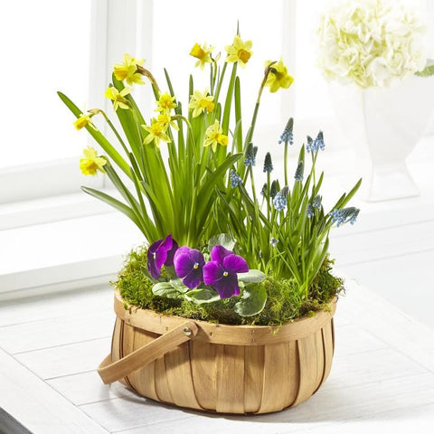 The Spring Blooms Bulb Basket