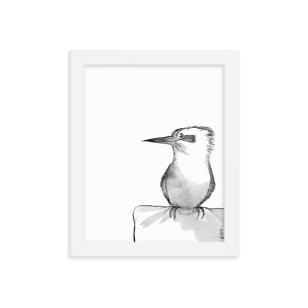 Kookaburra Watercolor Sketch (Framed Poster Print)