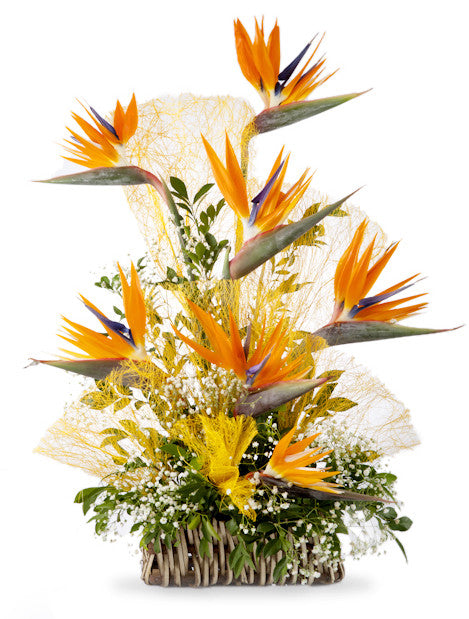 send birds of paradise flowers online with Shamuns florist In Pune