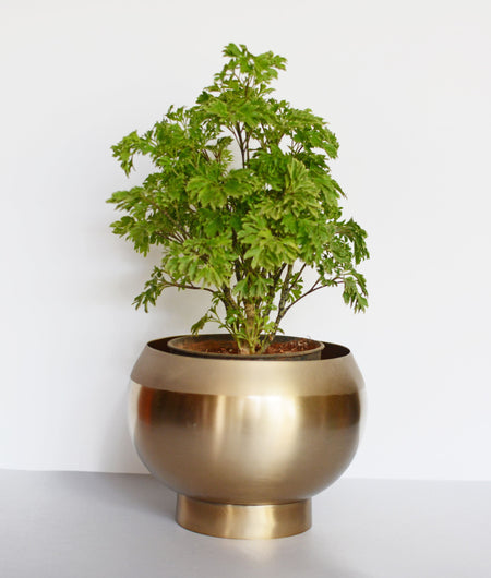 Lilian Gold Planter