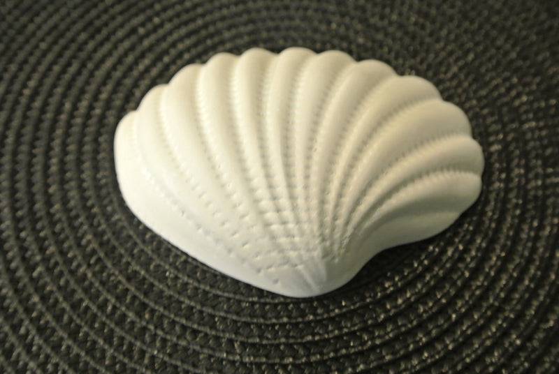 Shell Paintable - 2D