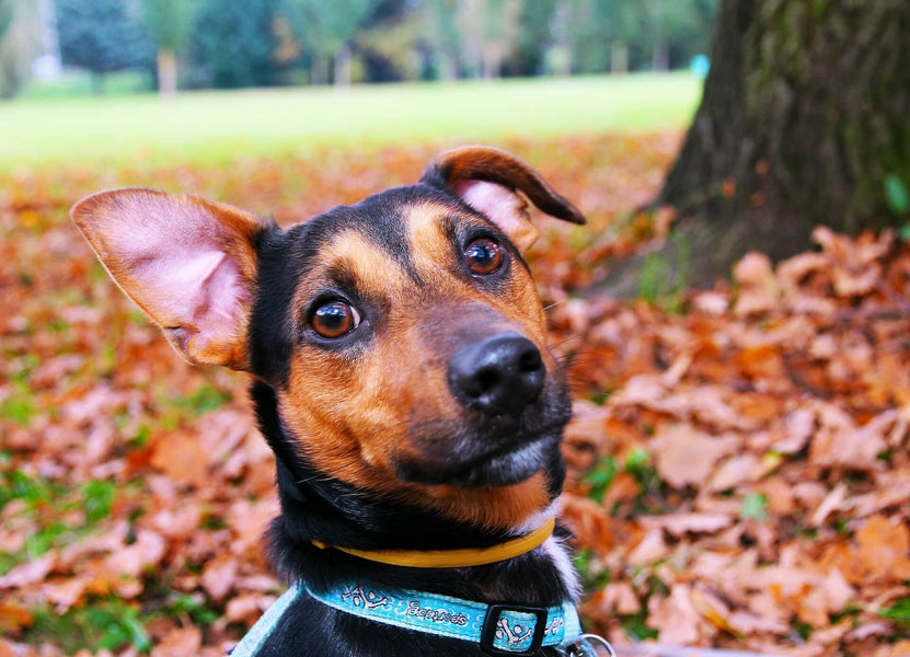7 Autumn Essentials For Dogs (And Owners)