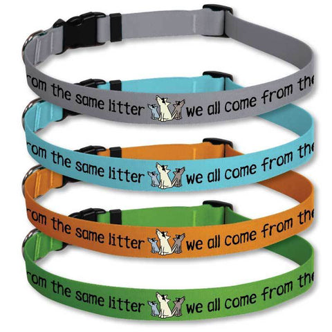 We All Come From The Same Litter - Dog Collars