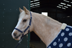 Blue Spotty Headcollar