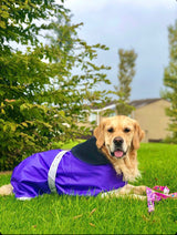 Purple Waterproof Dog Coat