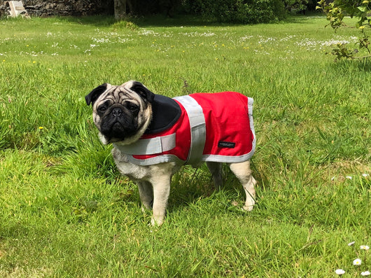 Red Waterproof Dog Coat