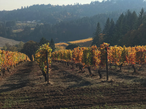 Holloran Vineyard Wines_Fall Color_Dundee1