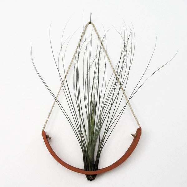Mudpuppy Air Plant Hanging Planter- Terracotta Large