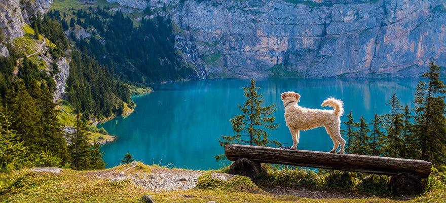 11 Adventures You'll Want to Have with Your Dog This Summer
