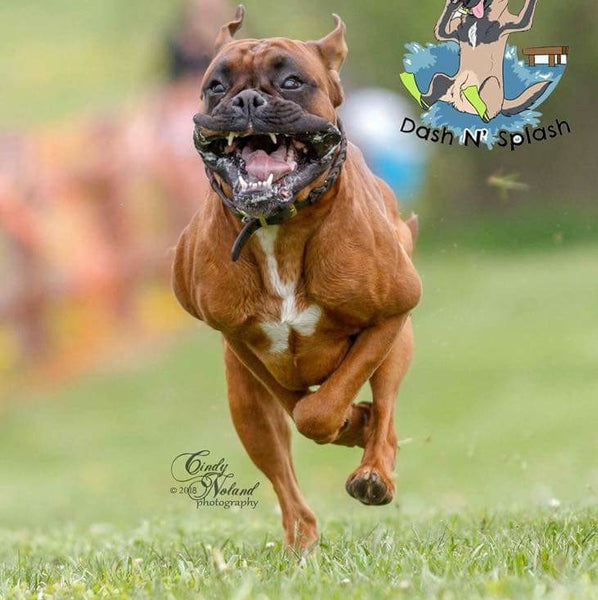 Keep Your Dog Running Strong With    K9 Power Joint Strong