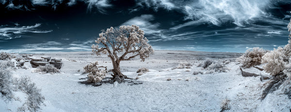 A photo of a tree in the middle of the country side shot in infrared. Photo is a free high resolution stock image to use any way you choose.