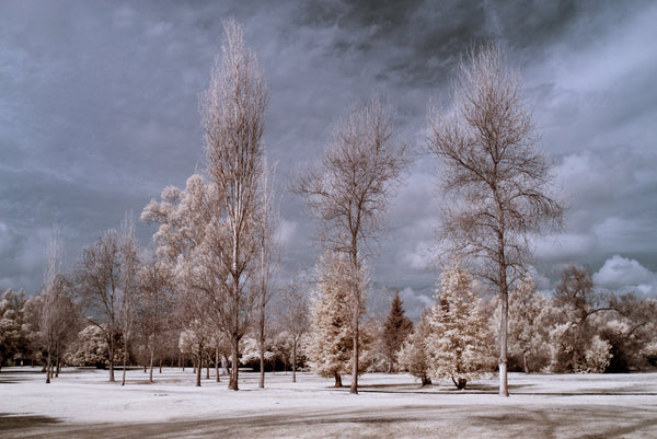 A photo of in infrared of a tree lined park. Photo is a free high resolution stock image to use any way you choose.