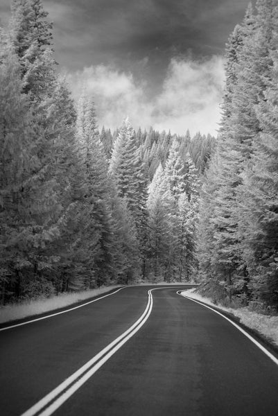 A photo of a tree covered road in Montana, shot in black and white. Photo is a free high resolution stock image to use any way you choose.