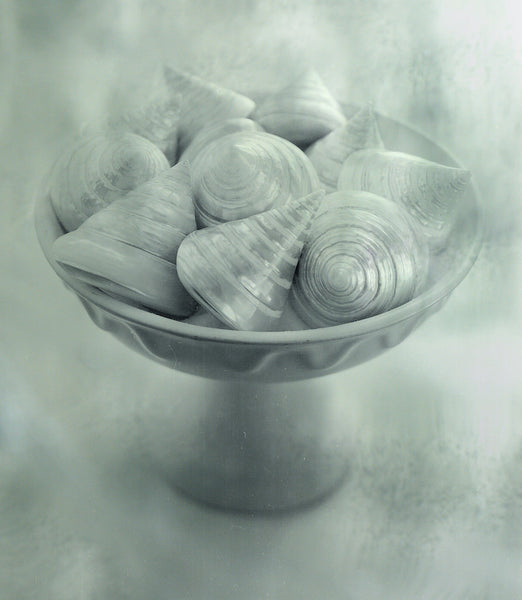 A photo of sea shells shot in a studio setting. Photo is a free high resolution stock image to use any way you choose.