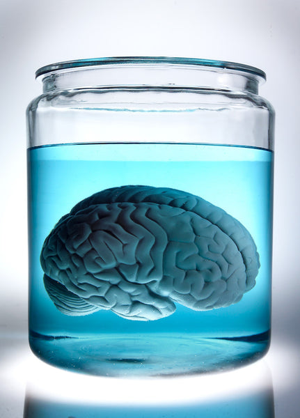 A photo of a brain in a jar. Photo is a free high resolution stock image to use any way you choose.