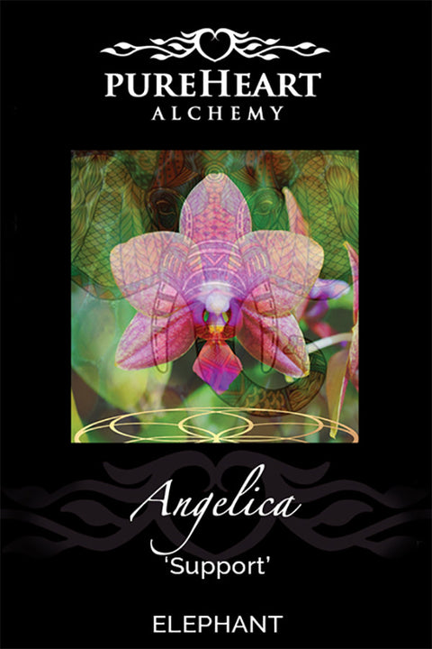 Angelica ~ Salve of Comfort during tender transitioning