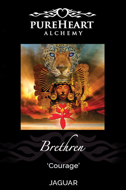 Brethren ~ Embracing Change with a Fire-Belly of Confidence