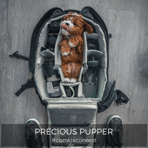 August Photo Contest: Precious Pupper