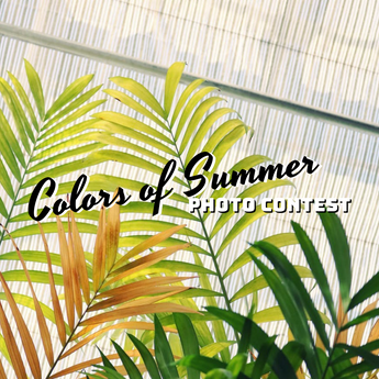 Winning Entry: Colors of Summer Photo Contest on Instagram