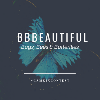 March CamKix Photo Contest: BBBeautiful (Bugs, Bees and Butterflies)