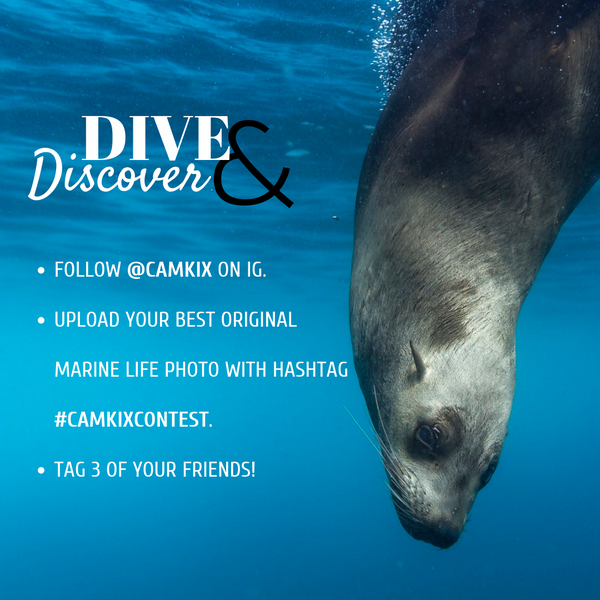 November Photo Contest: Dive and Discover
