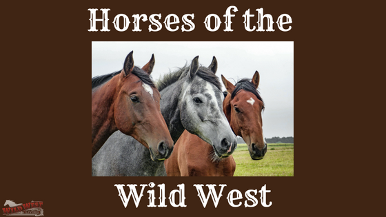 Horses of the Wild West