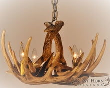 Load image into Gallery viewer, (CHD-W6) Whitetail Deer 6 Antler Chandelier